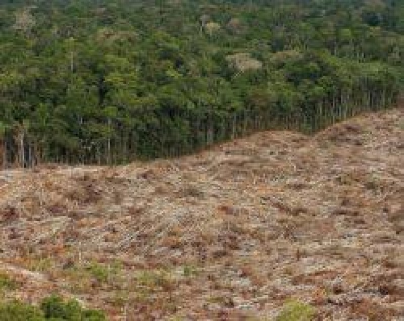 [Ruralistas querem votação do Código Florestal]