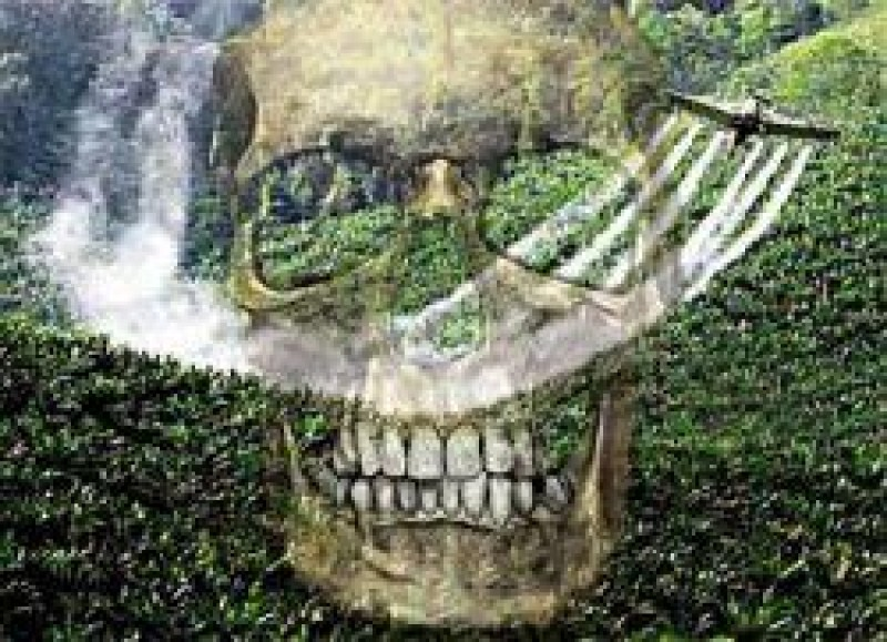 [Uso de agrotóxicos no Brasil deve superar recorde de 1 mi de toneladas]